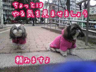 Image0331.jpg