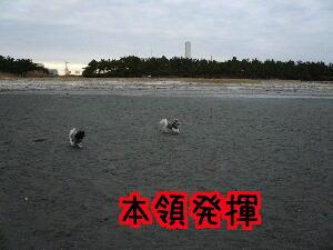 P1030140.jpg