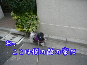 P1030403.jpg