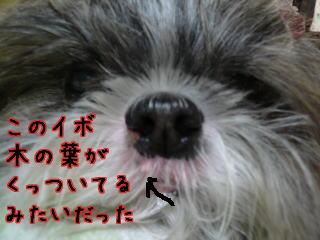 P1050308.jpg