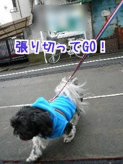 P1050777.jpg