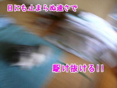 P1070345.jpg