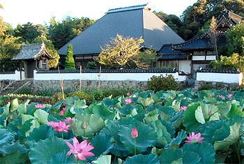 正護寺と蓮池
