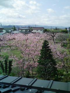 窓から見える桃源郷