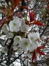 YAMAZAKURA0904