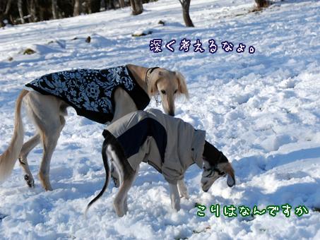 カリフ兄さんの雪講座