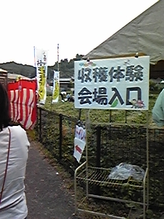 20081004153501