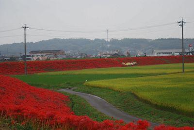 矢勝川堤防