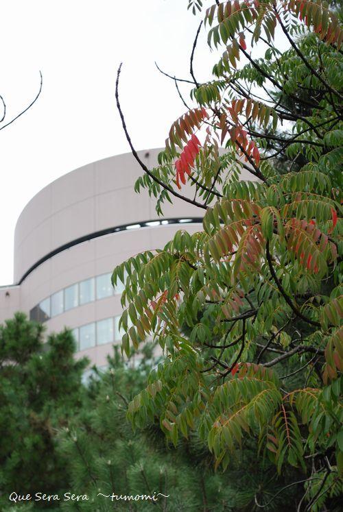 紅葉と病院