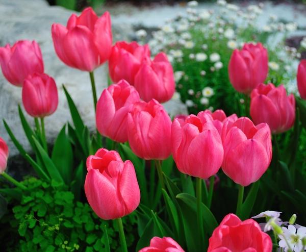 「春のエチュード」
