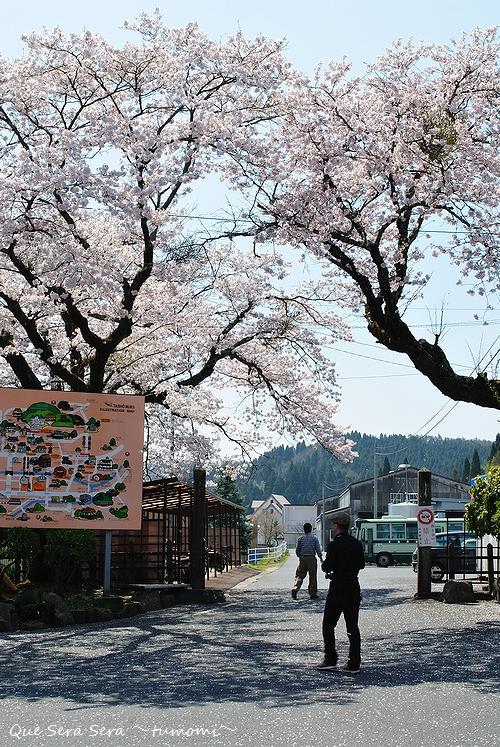 駅前の桜たち