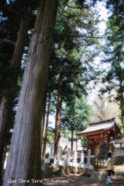 守芳院の杉の木
