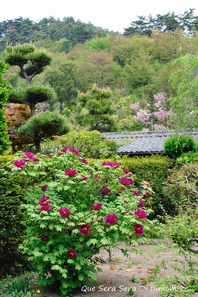 ボタンのある庭
