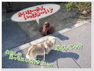 20091102(2).jpg