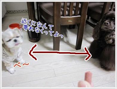 20100111(2).jpg