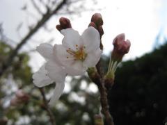 誉田八幡宮2
