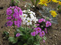 保育園花壇