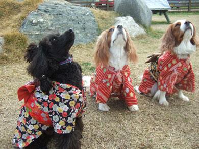 kimono15.jpg