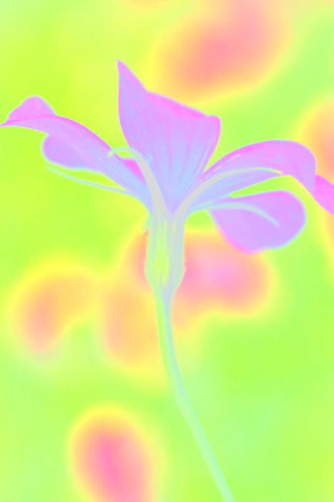 allDSC_9249_20090710232727.jpg