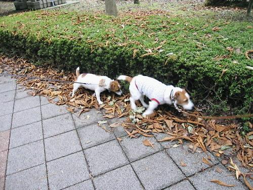 9長岡公園689