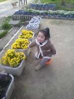 公園のお花*