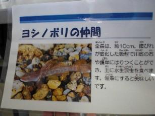 yosinobori1.jpg