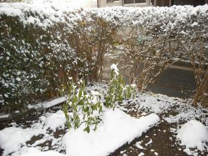 2008年、初雪!11月19日1