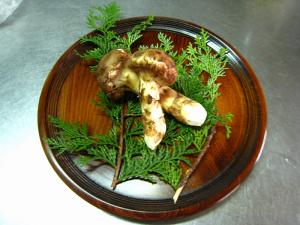 松茸、H.20神石高原町産1
