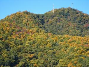 2008年秋、紅葉1