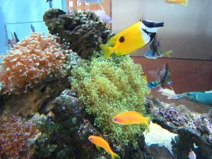 倉敷中央病院、熱帯魚たち、2