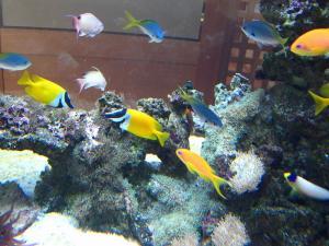 倉敷中央病院、熱帯魚たち、3