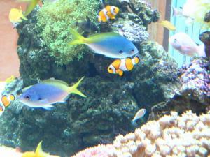 倉敷中央病院、熱帯魚たち、5