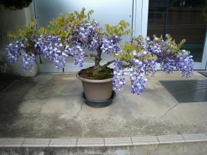 福山北警察署油木交番の「藤」