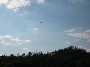 R182号線・高山、「ハンググライダー」3