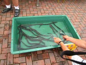 油木百菜館「百菜館祭り、2009.7.19」、土用の丑の日、3
