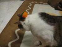 耐え忍ぶ猫