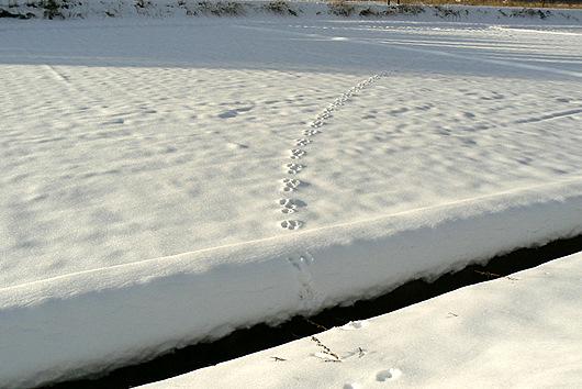 090201 ウサギの足跡