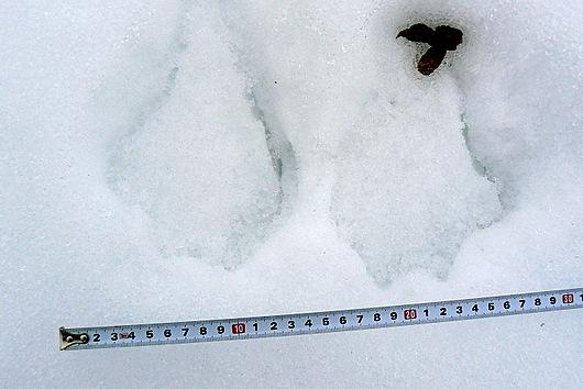 090201 謎の足跡
