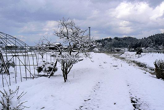 090328 雪景色