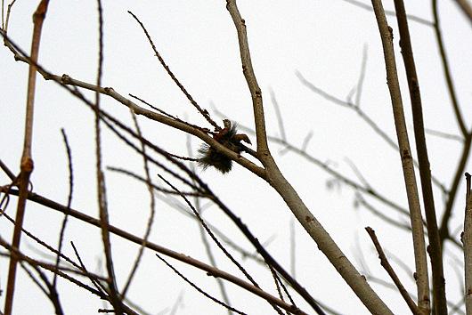 090404 枝に挟まれた異物