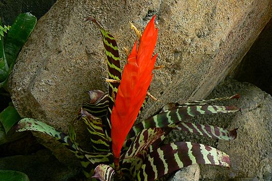 090504 岩場の植物2