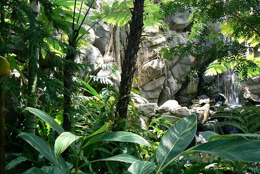 090504 ジャングル