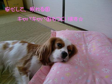 20090721_0022.jpg