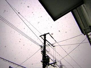 2009-04-26 awayuki
