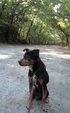 下鴨神社 糺の森①