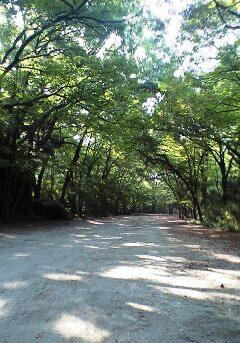 下鴨神社 糺の森②