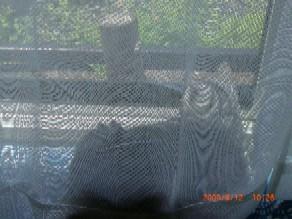kカーテン