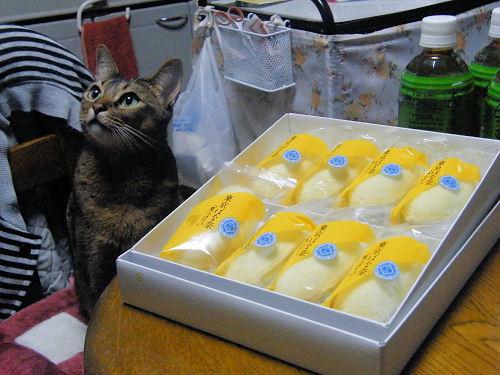 猫も大好き「東京ばな奈」