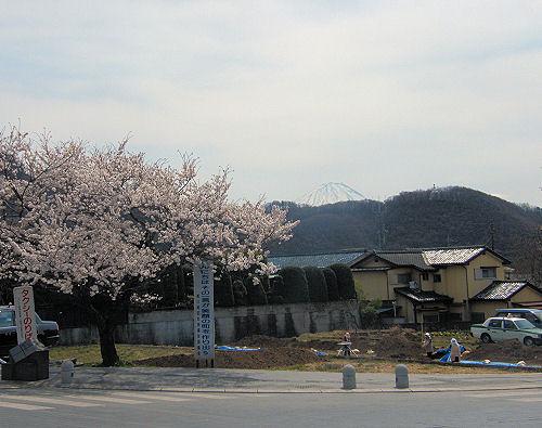 武田神社門前桜