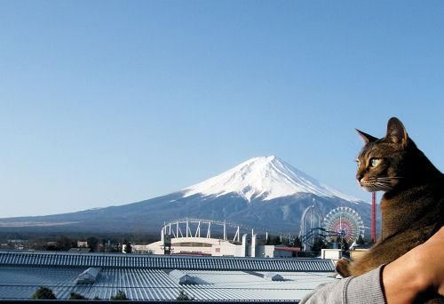 日本一の富士、日本一のニャン